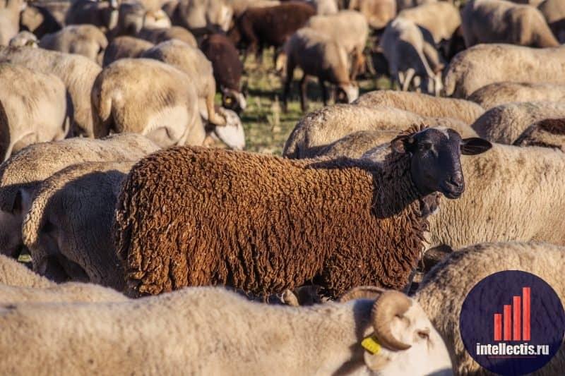 Как работают инвестиции в животноводство?